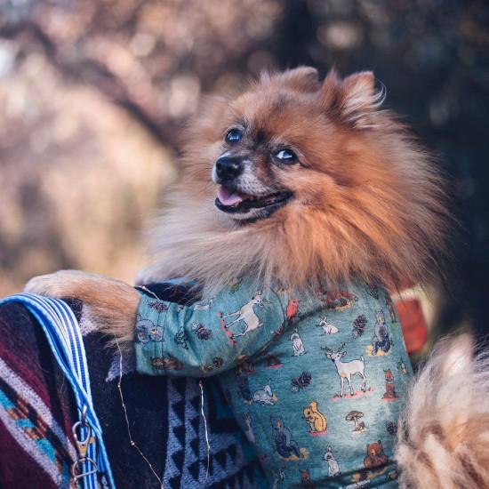 Erdő lakói pulóver