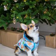 Bulldog Karácsonyt kabát - kék