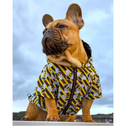 Bee yourself🐝 everyone else is already taken! • • • Do you want a unique look?😎 Choose the Bee Yourself raincoat and you'll be the most fashionable doggie🐾🐝