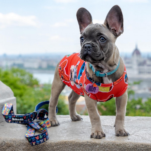 Every puppy needs a SUPER fashionable Cooling Shirt!🦸🏼♂️