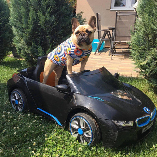 Beep beep🚘 Dog fashionistas is coming!😎